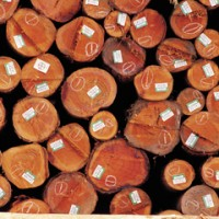 Timber! Pick Weyerhaeuser Up Off the Ground