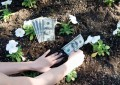 planting money for growth 630