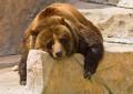 bear-market-lazy-630-ISP
