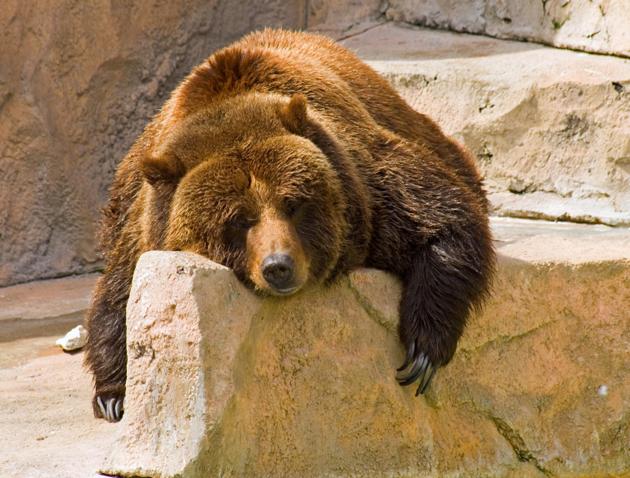 A Bear Market 3 Bear Market Funds to...