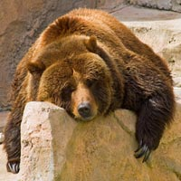 Bear Market and Corrections