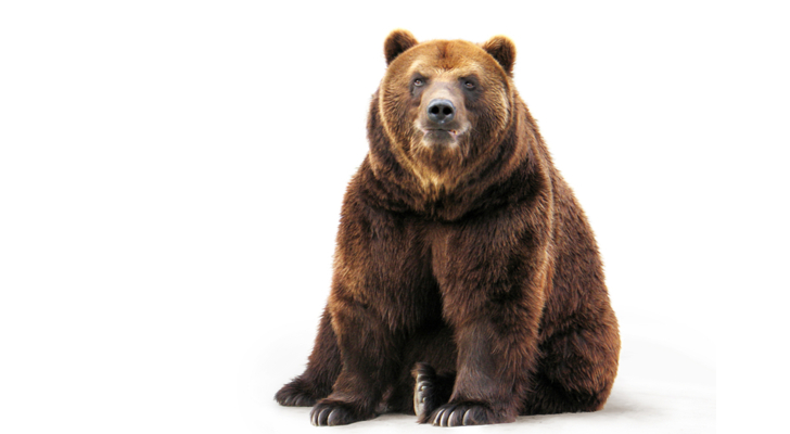 mutual funds - The 9 Best ETFs and Mutual Funds for a Bear Market