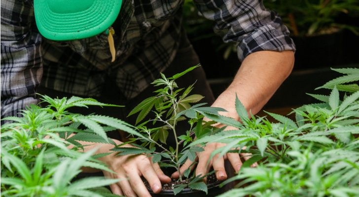 5 Marijuana Stocks to Watch: Cronos (CRON)