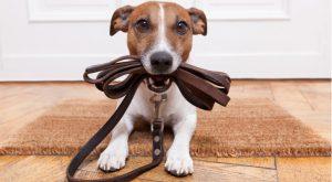 Dog food recall