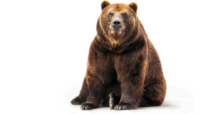 10 tech stocks that will defend against the bears - 10 Tech Stocks to Buy If You're Afraid of the Bears