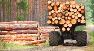 Undervalued Dividend Stock: CatchMark Timber Trust (CTT)