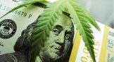 5 Marijuana Stocks to Watch