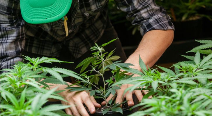 Here Are the Only Two Marijuana ETFs U.S. Investors Need Consider