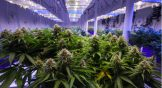 5 Marijuana Stocks to Ride Canada's Legalization Wave