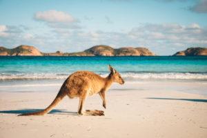 a photo of a kangaroo