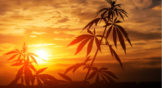 4 Reasons Why Pot Stocks Will Be More Stable In 2019