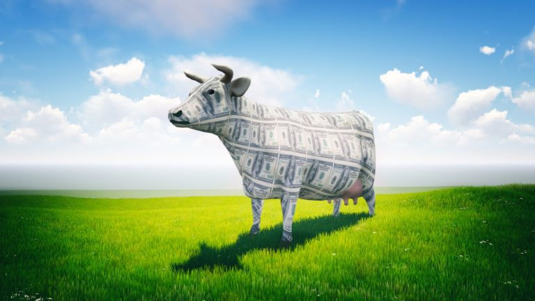 Stocks to buy - 5 Cash Cow Stocks to Buy With Attractive Upside Potential