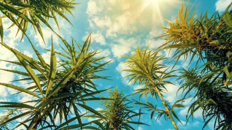 Marijuana Stocks - 7 Marijuana Stocks To Buy As Usage Moves Mainstream