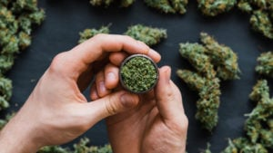 A close-up shot of hands holding a grinder with cannabis buds in the background.