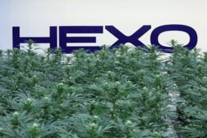 Hexo (HEXO) logo with marijuana plants in the foreground