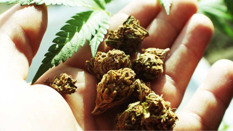 marijuana stocks - 4 Marijuana Stocks to Own If the U.S. Legalizes Pot