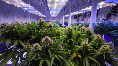 3 Cannabis Stocks to Buy Today