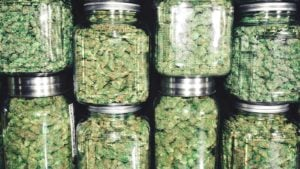 multiple jars of different sizes carrying marijuana