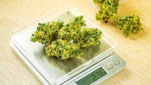 Image of marijuana being weighed on a scale