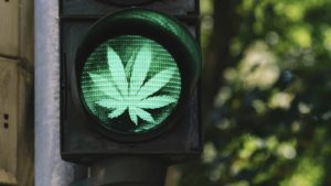 marijuana leaf in green traffic light