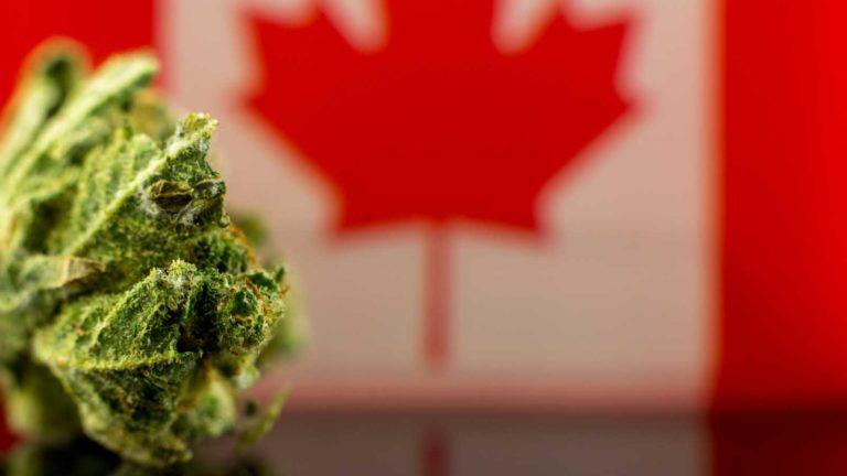 marijuana stocks - Ranking the 'Big 4' Canadian Marijuana Stocks From Best to Worst