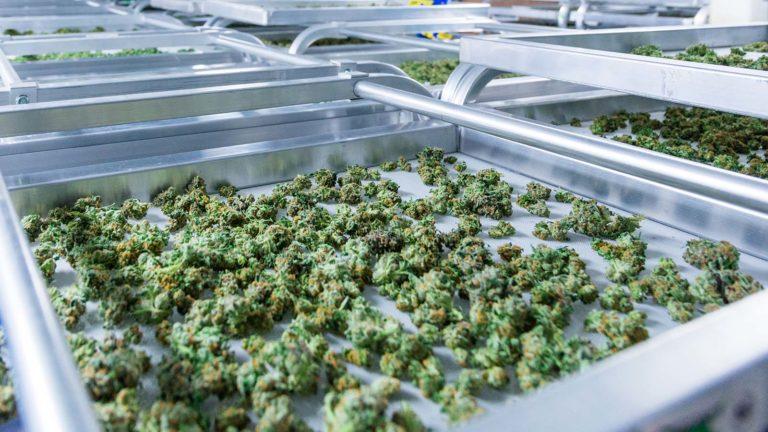 Marijuana Stocks - 3 Marijuana Stocks With High Hopes for the Future