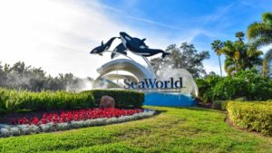 Undervalued Stocks: SeaWorld (SEAS)