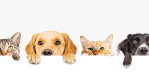 Pet Care Stocks: Unleash the Profit Potential of the PAWZ ETF