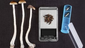 magic mushrooms representing champion brands, and OTC stocks