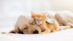 a puppy and a kitten sniggling together. represents pet stocks