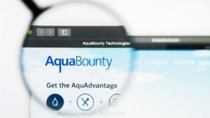 A magnifying glass zooms in on the website for AquaBounty Technologies (AQB).