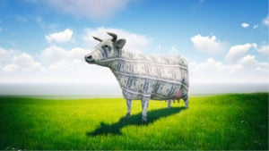 cow made out of cash in green field with bright blue sky behind it