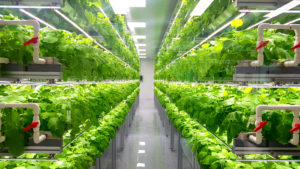 indoor vertical farming set up with green plants on shelves and PVC irrigation tubes