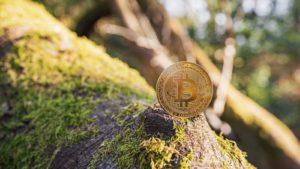 Une pièce de monnaie Bitcoin (BTC) posée sur un morceau de bois moussu.