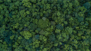 An aerial shot of a deciduous forest